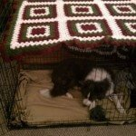 Midwest-iCrate-Pet-Crate13
