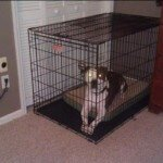 Midwest-iCrate-Pet-Crate2