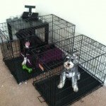 Midwest-iCrate-Pet-Crate6