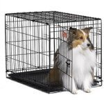 Midwest iCrate Single-Door Pet Crate 30 x 19 x 21 inches Review