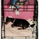 Midwest LIFE STAGES Front Door Crate4