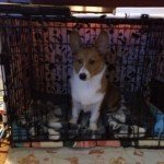 Midwest Life Stages Folding Metal Dog Crate12