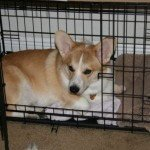Midwest Life Stages Folding Metal Dog Crate13