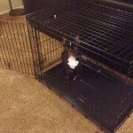 Midwest Life Stages Folding Metal Dog Crate14