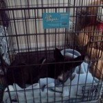 Midwest Life Stages Folding Metal Dog Crate4