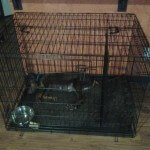Midwest Life Stages Folding Metal Dog Crate6