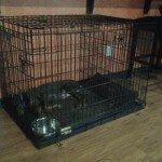 Midwest Life Stages Folding Metal Dog Crate7