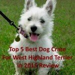 Top 5 Best Dog Crate For West Highland Terrier