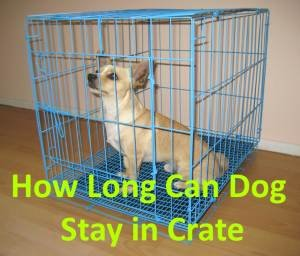 How Long Can Dog Stay in Crate?