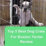 Top 5 Best Dog Crate For Boston Terrier Review