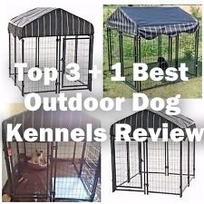 Top 3 + 1 Best Outdoor Dog Kennels Review