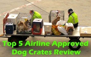 Top 5 Airline Approved Dog Crates 2017 Review
