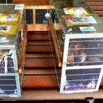top-5-airline-approved-dog-crates-review6