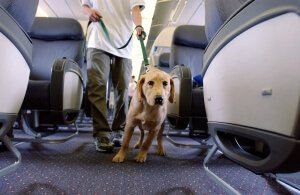 airline-approved-pet-kennels-review