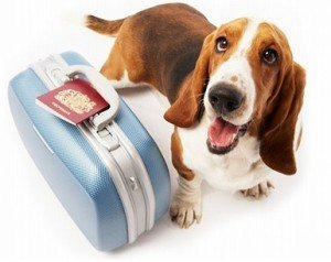 top-5-airline-approved-pet-kennels-review