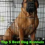 Top 5 Best Dog Kennels and Cages For Bullmastiff in 2016 Review