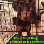 Top 5 Best Dog Kennels and Cages For Doberman Pinscher in 2016 Review