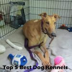 Top 5 Best Dog Kennels and Cages For Greyhound in 2016 Review