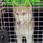Top 5 Best Dog Kennels and Cages For Siberian Husky in 2016 Review