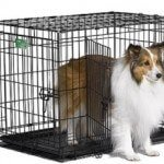 Midwest iCrate Two Doors Pet Crate 30 x 19 x 21 inches Review