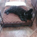 Midwest-iCrate-Pet-Crate