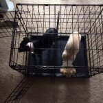 Midwest-iCrate-Pet-Crate11