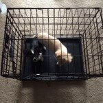 Midwest-iCrate-Pet-Crate12