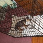 Midwest-iCrate-Pet-Crate14