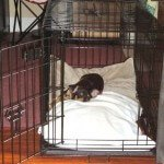Midwest-iCrate-Pet-Crate15