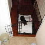 Midwest-iCrate-Pet-Crate16