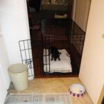 Midwest-iCrate-Pet-Crate17