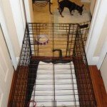 Midwest-iCrate-Pet-Crate18