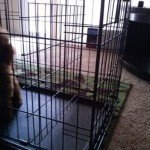 Midwest-iCrate-Pet-Crate22