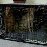 Midwest-iCrate-Pet-Crate3