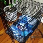 Midwest-iCrate-Pet-Crate32