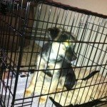 Midwest-iCrate-Pet-Crate38