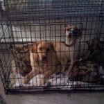 Midwest-iCrate-Pet-Crate5