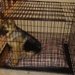 Midwest-iCrate-Pet-Crate7