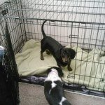 Midwest-iCrate-Pet-Crate8
