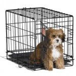 Midwest iCrate Single-Door Pet Crate