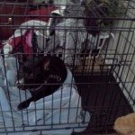 Midwest Life Stages Folding Metal Dog Crate5