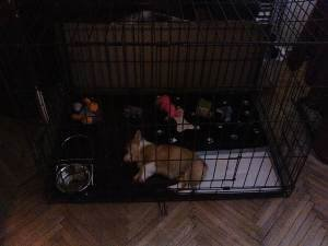 The Size of the Crate for puppy