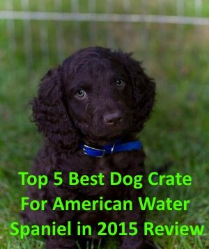 Top 5 Best Dog Crates For American Water Spaniel in 2019 Review