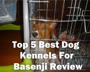 Top 5 Best Dog Kennels For Basenji in 2018 Review