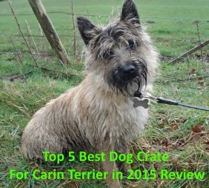 Top 5 Best Dog Crates For Cairn Terrier in 2020 Review