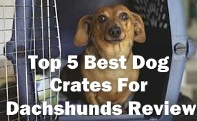 Top 5 Best Dog Crates For Dachshunds in 2018 Review