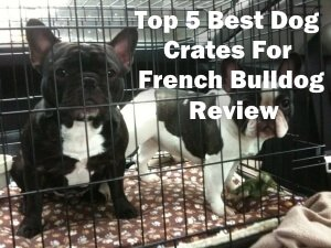 Top 5 Best Dog Crates For French Bulldog in 2018 Review