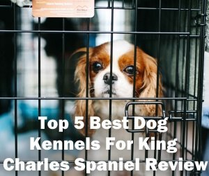 Top 5 Best Dog Kennels For King Charles Spaniel in 2018 Review