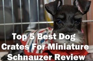 Top 5 Best Dog Crates For Miniature Schnauzer in 2020 Review
