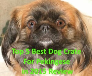 Top 5 Best Dog Crates For Pekingese in 2020 Review